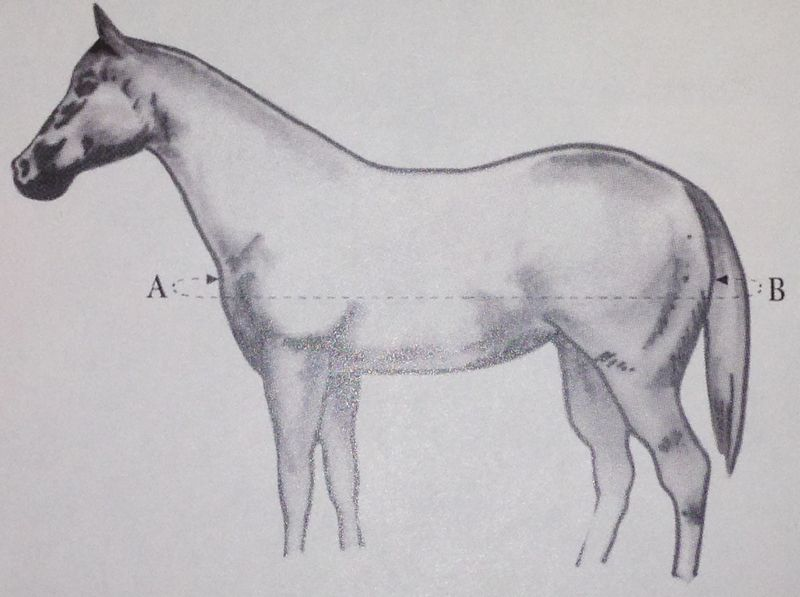 img-1836-cr.jpg